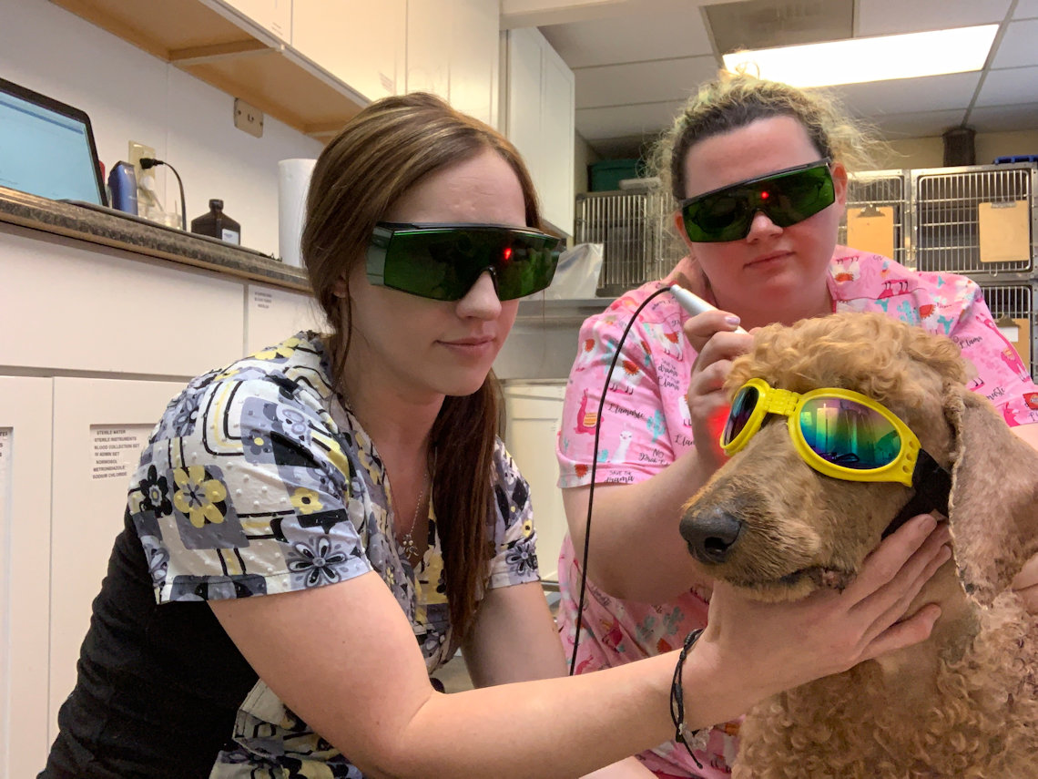 K-Laser Therapeutic Treatment for Pets